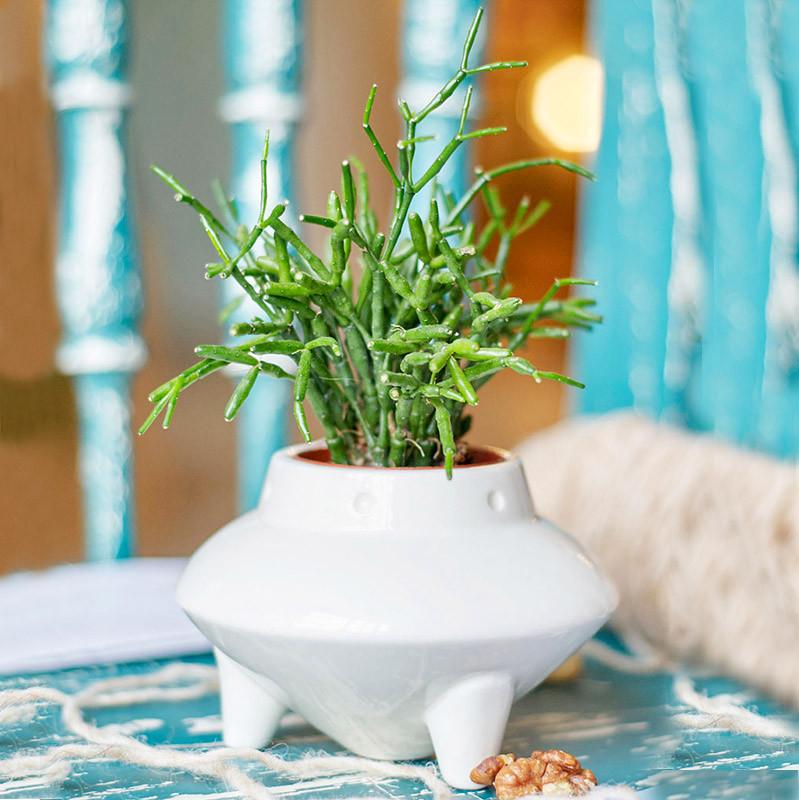Экочеловеки Набор для выращивания eco нло набор для выращивания eco лентяй 1072173