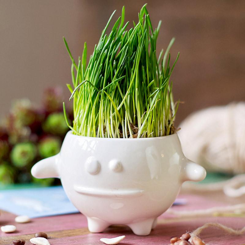 Экочеловеки Набор для выращивания eco кру набор для выращивания eco лентяй 1072173