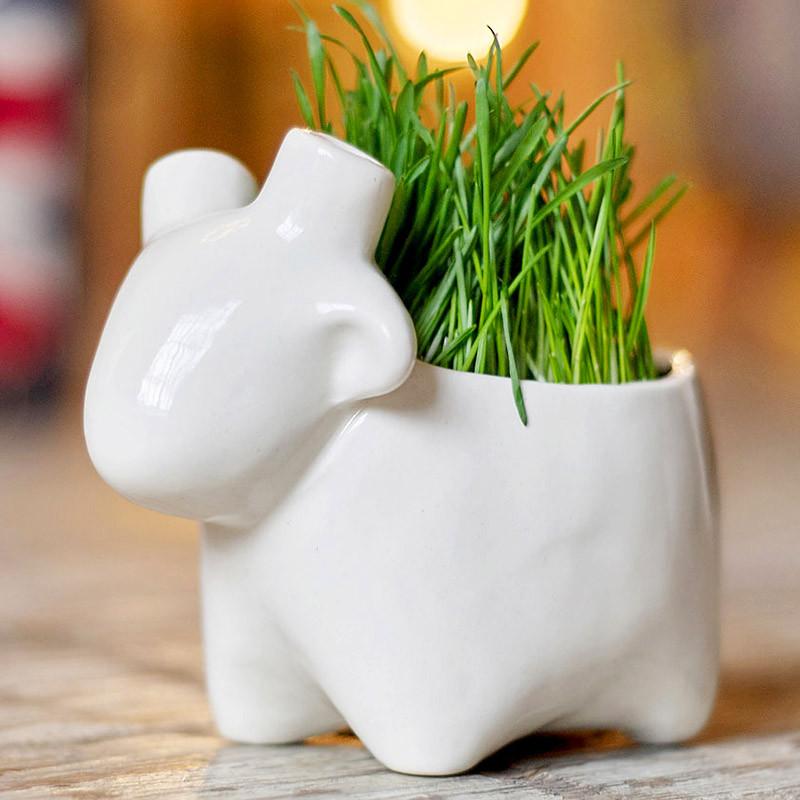 Экочеловеки Набор для выращивания eco овечка набор для выращивания eco лентяй 1072173